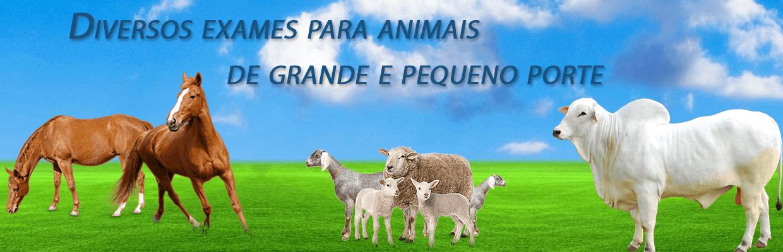 Diversos Exames para Animais de Grande e Pequeno Porte