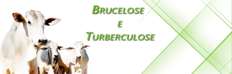 Brucelose e Turberculose