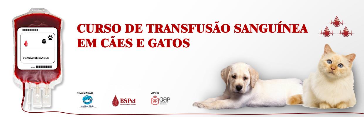 Transfusão sanguínea em cães e gatos